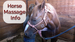 Armstrong Equine Massage Services - Horse Dog Canine Massage Therapy Minnesota MN North Dakota ND Wisconsin WI